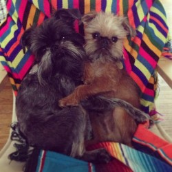 stevienicksthedogblog:  Rainy day cuddles. Even I may puke from how fricken sweet this is…
