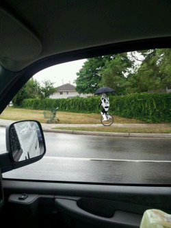 An Aussie stormtrooper on a unicycle.