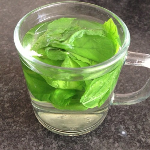 Fresh #mint from the garden. Where's the #honey?