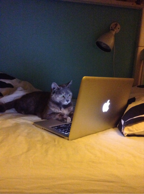 parchutes:  My cat has actually been running my blog this entire time?¿?