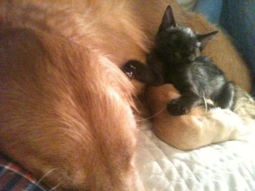 my kitten and my doggy <3 o how i love them