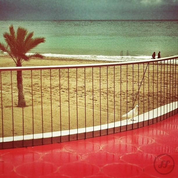 #red #benidorm #igersbenidorm #beach #horizon #dove #sea