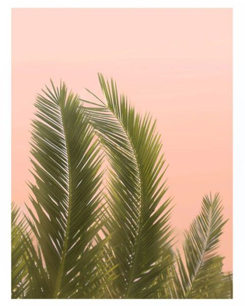palm tree palm palms palm trees palm leaves cali CA california california style california love sunny sunny day sunny california sunshine summer summertime summer love Endless Summer tropical tropic tropics beach beaches beach style