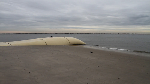 "Two weeks before Sandy, engineers placed man-made dunes along the coast of Brooklyn. ""If Sandy had happened three weeks before when it did, we would have lost the Belt Parkway."" READ MORE"