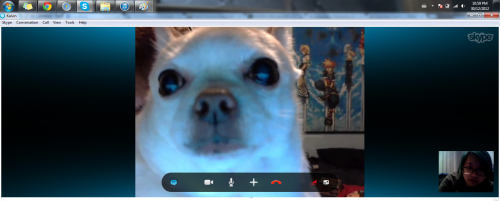 Webcamming with Puppy, the obese chihuahua.  :-)