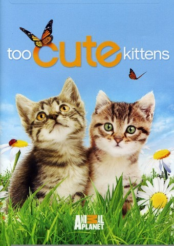 TOO CUTE KITTEN CAM LIVEby HelloGiggles Team http://bit.ly/WJkAV1