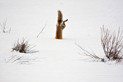 wtbw:  (via National Geographic Photo Contest 2012 Winners)