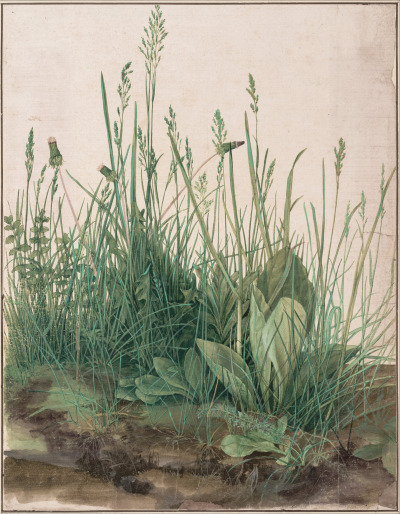 heaveninawildflower:  The Large Piece of Turf (1503) by  Albrecht Dürer (1471–1528). Watercolour and body colour, heightened with white body colour. Albertina, Vienna Google Art Project: Home via Wikimedia.