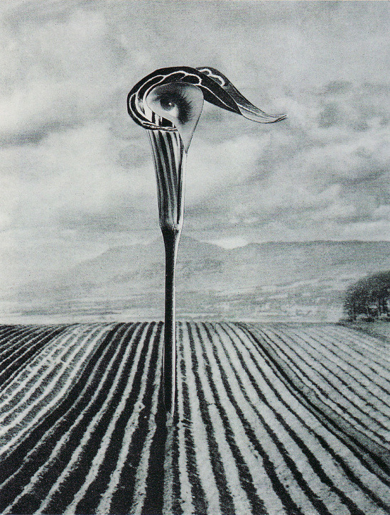 Karel Teige, Collage #325 , 1947