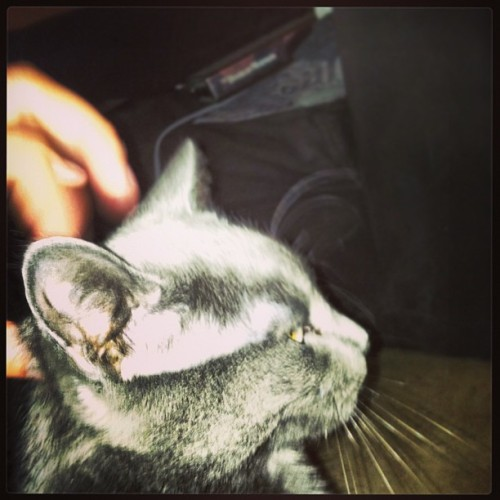 Diss #kitty kitty I #love love love (at Pad-O-Chis)