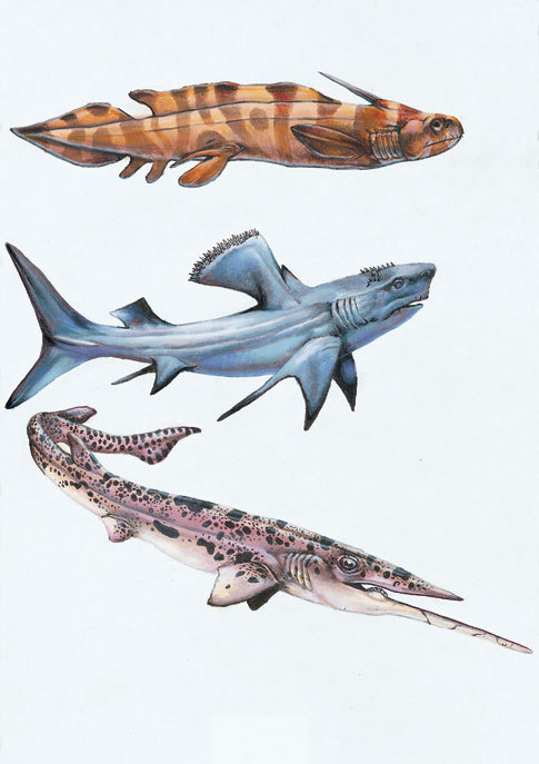 geozoic:  Steve White WEIRD SHARKS I by ~SharkeyTrike