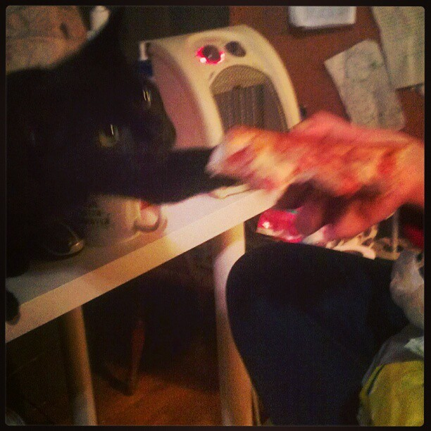 PIZZACAT #pizza #catte #food (at Mermaid Misandry Monster Mission)