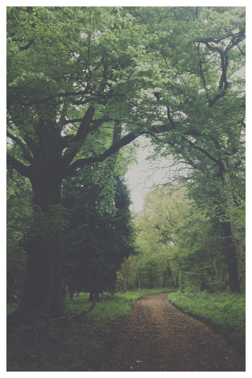 wild-nirvana:  south-england:  Walking in the woods »» Thomas Hanks   •my spiritual world•
