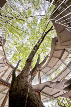 Photo: Katsuhisa Kida. Ring Around a Tree by Tezuka Architects. 2011.
