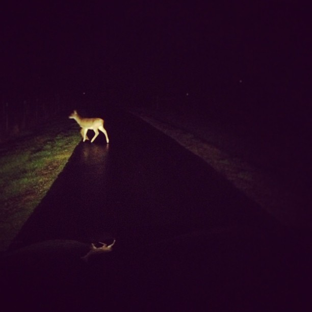 Late night champagne run. Deer in the headlights. #happyholidays #oregon #❤🎁🎄👍