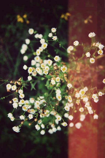 godmoves:  pretty flowers