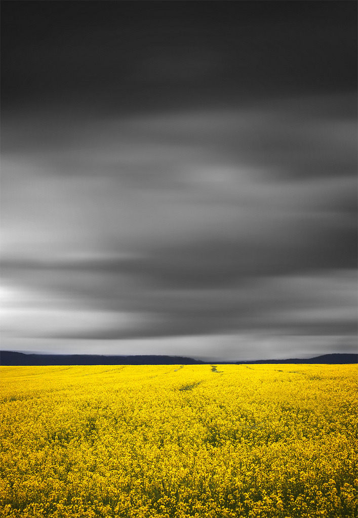 h4ilstorm:  Fields Of Yellow || BATHURST CANOLA CROPS (by rhyspope)
