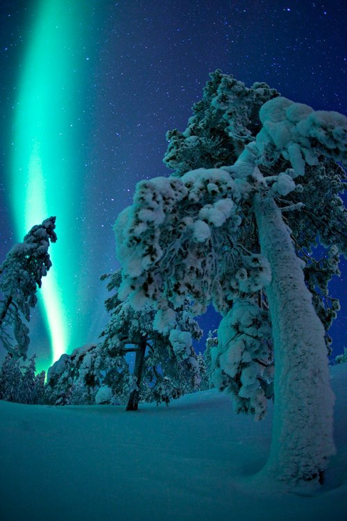 popelkuschristmas:  Northern Lights over Finland