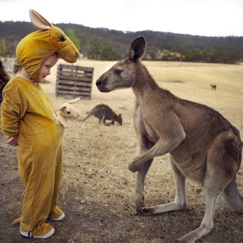 this is cute but 10 seconds later that kangaroo kicked the shit out of that kid and put it in a sleeper hold and suffocated it because kangaroos are real as F*ck