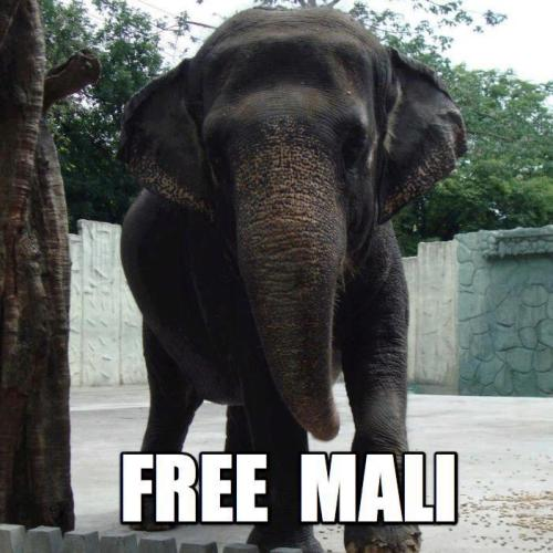 HEARTBREAKING: For 35+ years, Mali the elephant has been confined to a barren concrete enclosure at the Manila Zoo. She hasn't seen another elephant in over THREE DECADES! Help get her to a sanctuary NOW: http://peta.vg/1h9