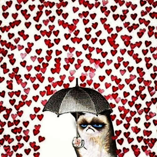 Lol funny kitty!! #cat #valentines #foreveralone #makeitrain #boredsoimputtingrandomhashtags #umbrella #cat #hearts #lmao