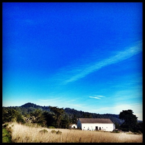 Another gorgeous day #california #california_igers (at Año Nuevo State Park)