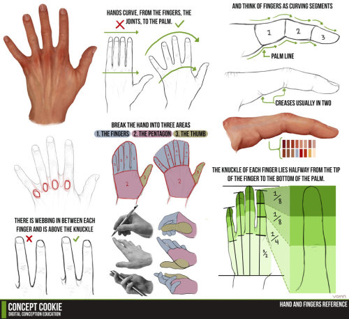 museofanartist:  Hand and Fingers Resource Tutorial by ConceptCookie