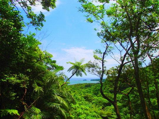 ゲータの滝・西表島ツアー