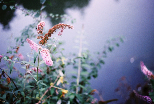 savvydarling:  Flowers, riverside. | Film by Andrew - Marshall on Flickr.