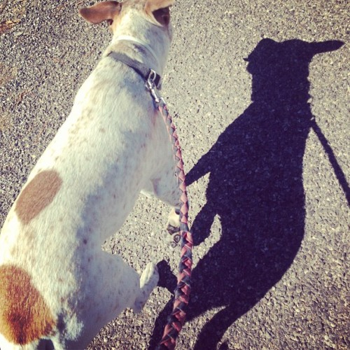 #lennon #walk #shadows #exercise #health #fitness  (at Town of Lake Arthur)