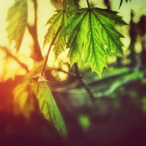 #leaves #sunset #nature #natureporn #light #green #sky #trees #spring  (at Fairmount Park)