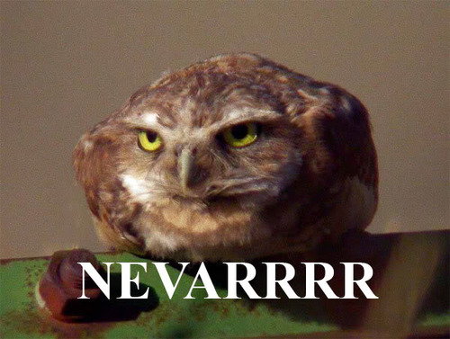 "Reaction image of an owl crouching and looking furious with the word ""NEVARRR"" written below it."
