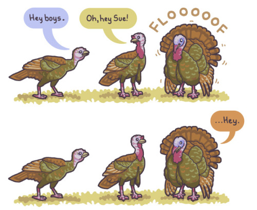 birdandmoon:  A new goofy thing about the wild turkeys I've seen (and heard) this spring. Here's this comic on my site. Thanks for your comments on my last post — so interesting!