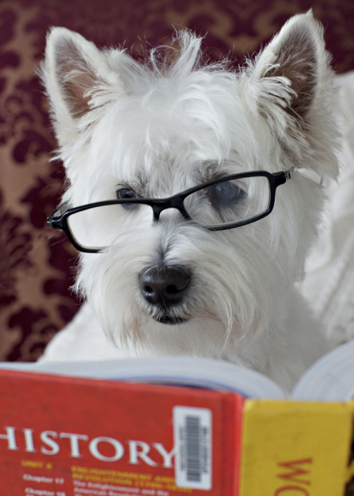 westieswestieswesties:  Walter is a gentleman and a scholar.