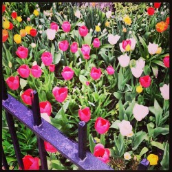 ironirony:  🌷SPRING HAS SPRUNG, MOTHERFUCKERS. #flowers #pretty #nature