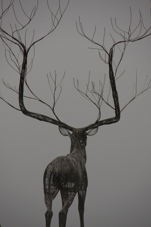 darksilenceinsuburbia:  Byeong Doo Moon. I Have Been Dreaming to be a Tree.