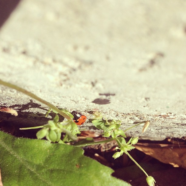I like your style, Gutter Bug. #spring #bugs