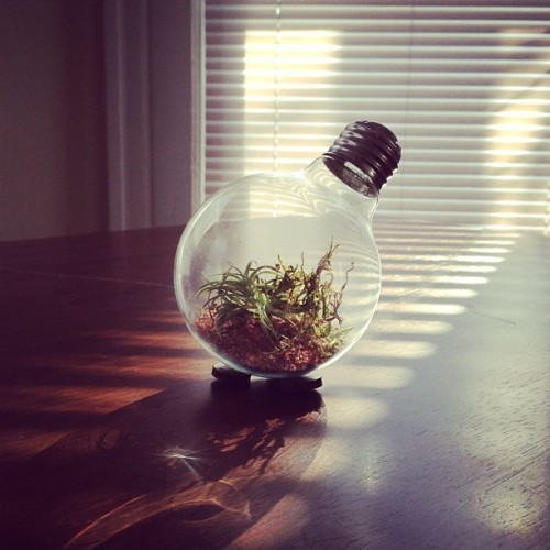My most favorite thing. Thank you @ladybug_kiss ✨ #airplant #lightbulb
