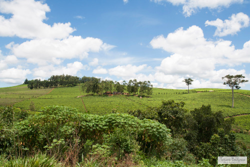 tatianaboldyreva:  On the way from Kampala to Jinja, Uganda