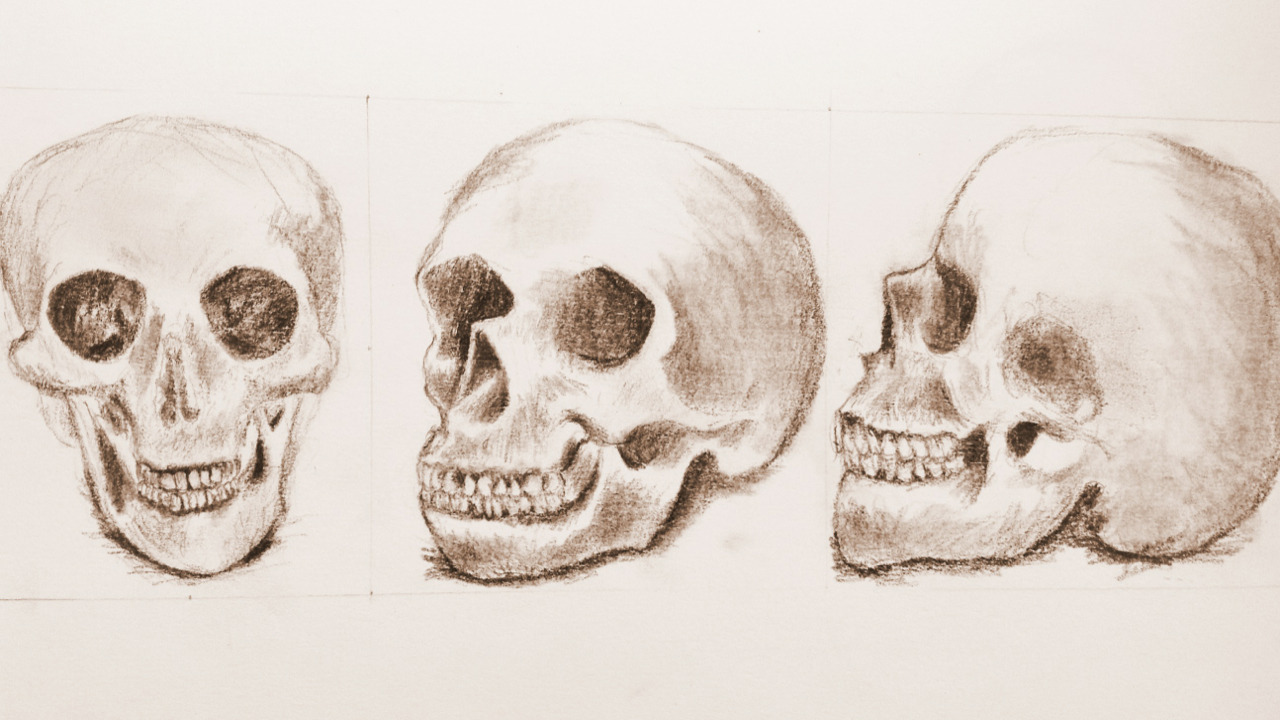 Some quick sketches in class. Each skull took about ten to fifteen minutes. I'm definitely not cut out to be a studio artist but this is fun!
