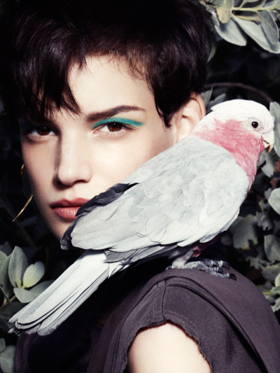 witcheslookbook:  (via Jessica Pitti Gets Feathered for Tatler Russia June 2013 by Marcus Ohisson | Fashion Gone Rogue: The Latest in Editorials and Campaigns)