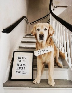 rainydaysandblankets:  a dog is love… so all you need is a dog.