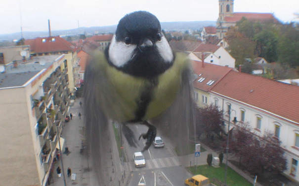pepsie:  I THOUGHT IT WAS A GIANT BIRD AND I WAS REALLY CONFUSED  Oh no. They say he's go to go, go go BIRDZILLA.