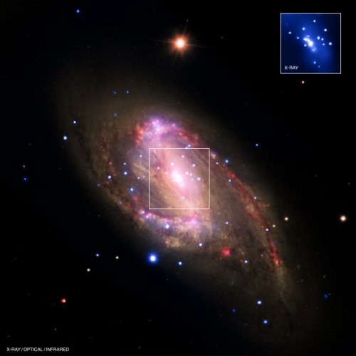 distant-traveller:  NGC 3627: Revealing hidden black holes The spiral galaxy NGC 3627 is located about 30 million light years from Earth. This composite image includes X-ray data from NASA's Chandra X-ray Observatory (blue), infrared data from the Spitzer Space Telescope (red), and optical data from the Hubble Space Telescope and the Very Large Telescope (yellow). The inset shows the central region, which contains a bright X-ray source that is likely powered by material falling onto a supermassive black hole.A search using archival data from previous Chandra observations of a sample of 62 nearby galaxies has shown that 37 of the galaxies, including NGC 3627, contain X-ray sources in their centers. Most of these sources are likely powered by central supermassive black holes. The survey, which also used data from the Spitzer Infrared Nearby Galaxy Survey, found that seven of the 37 sources are new supermassive black hole candidates.Confirming previous Chandra results, this study finds the fraction of galaxies found to be hosting supermassive black holes is much higher than found with optical searches. This shows the ability of X-ray observations to find black holes in galaxies where relatively low-level black hole activity has either been hidden by obscuring material or washed out by the bright optical light of the galaxy.The combined X-ray and infrared data suggest that the nuclear activity in a galaxy is not necessarily related to the amount of star-formation in the galaxy, contrary to some early claims. In contrast, these new results suggest that the mass of the supermassive black hole and the rate at which the black hole accretes matter are both greater for galaxies with greater total masses. Image credits: NASA/CXC/Ohio State Univ./C.Grier et al.; Optical: NASA/STScI, ESO/WFI; Infrared: NASA/JPL-Caltech