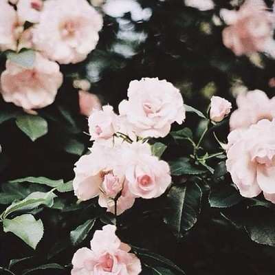dashing-all-around:  Tumblr | via Tumblr on @weheartit.com - http://whrt.it/19RCo2G