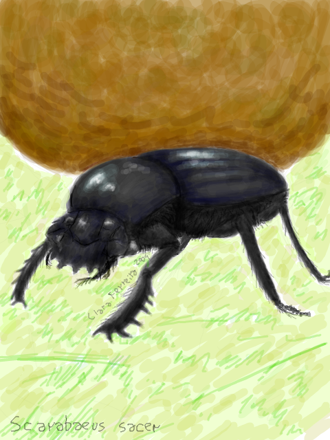 Dung Beetle, ah! Another oldy from Tegaki.