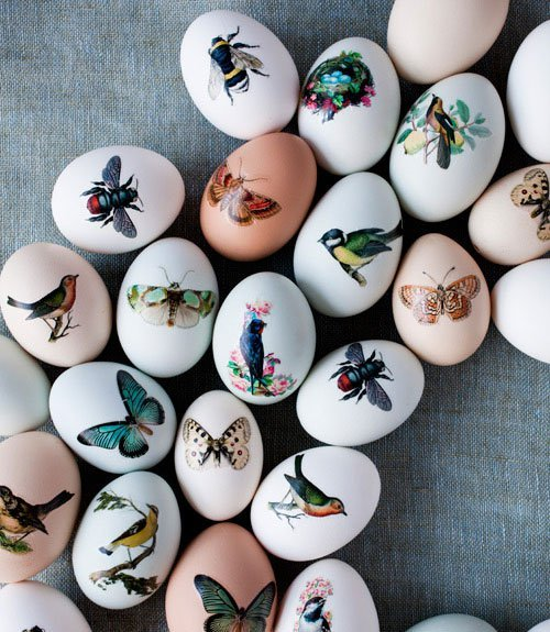 Tattooed Eggs. Photo: Burku Avsar.