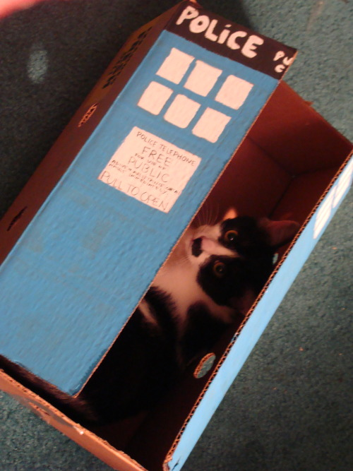 Cat in a TARDIS