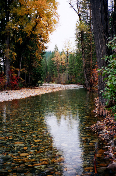 woodendreams:  (by elias.and.theresa.carlson)