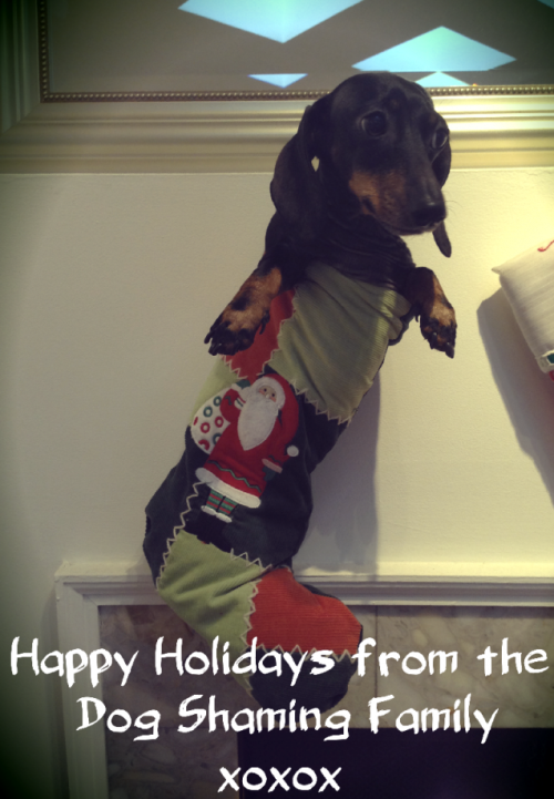 dogshaming:  Happy Holidays from all of us at Dog Shaming!!   We wish you all the best in the new year! Happy Shaming!  View Post shared via WordPress.com  dachshundddd :D
